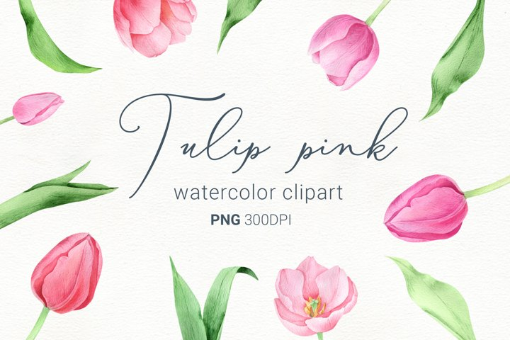 Spring watercolor flowers, pink tulip flower with stem, png