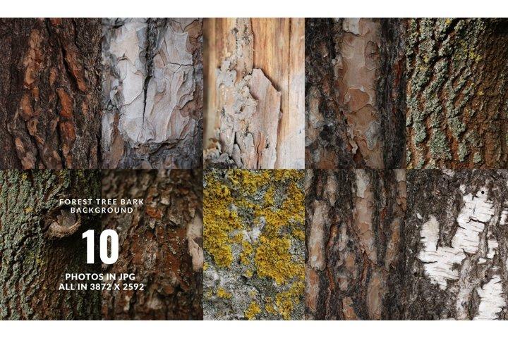 Set of forest backdrops - tree bark backgrounds Vol4