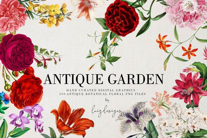Antique Garden|Elements Botanic