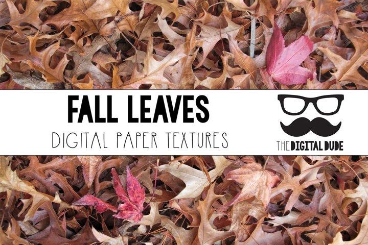 Fall Leaves - Forest Floor - Digital Paper Set - 12 Images