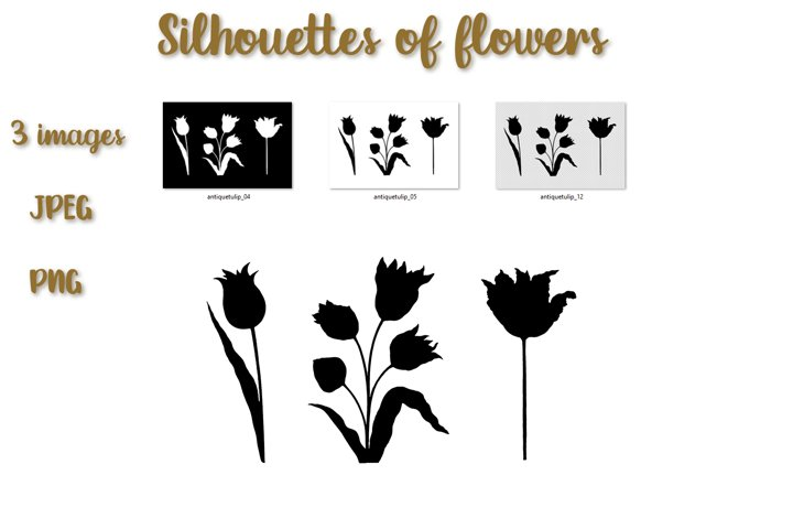 Floral illustration. Silhouettes of tulips