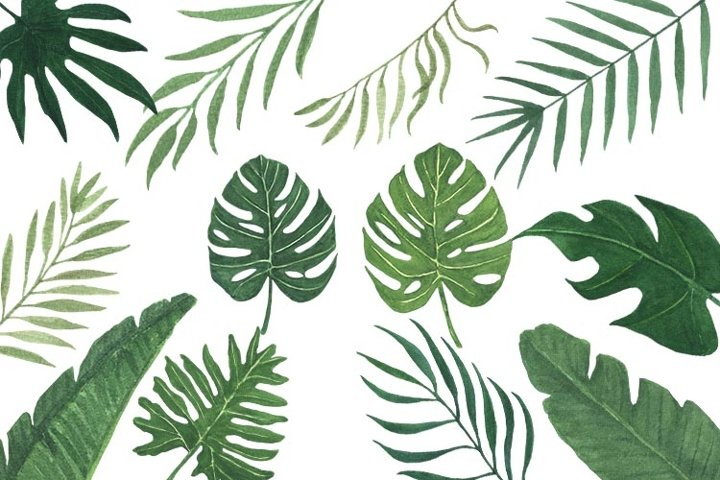 Greenery Tropical leaves Watercolor Clipart PNG files
