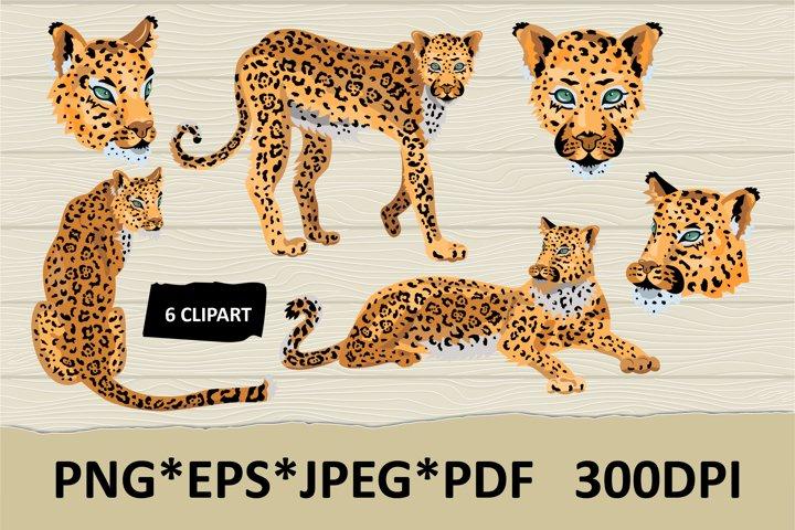 Leopards, cheetahs cliparts. Wild cats.