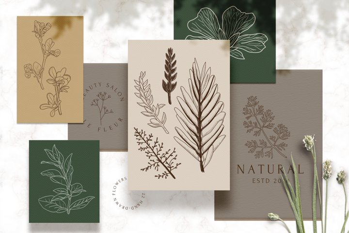 Botanical logos & illustrations