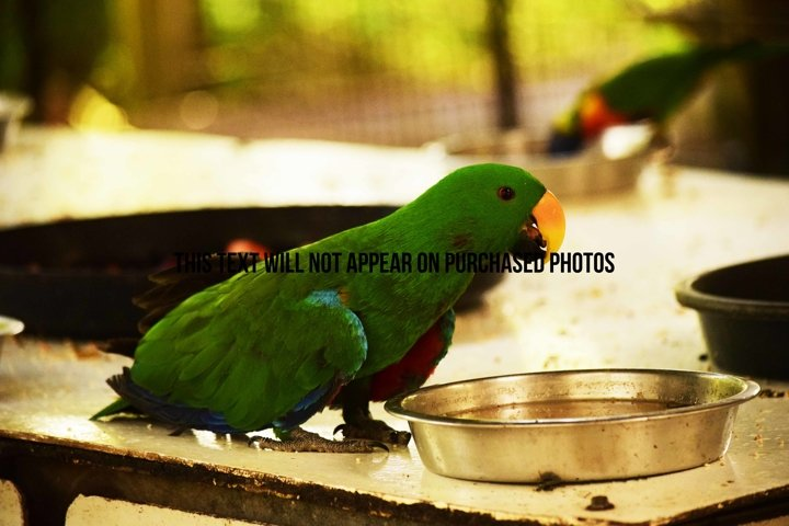 9 Beautiful Birds example 6