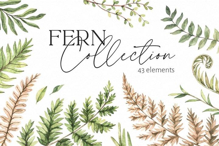 Watercolor fern   Greenery patterns
