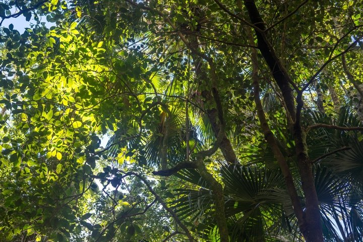 Rainforest Canopy at Macquarie Pass National Park