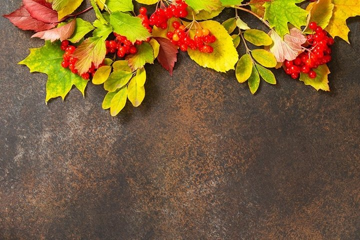 Autumn composition with autumn leaves.