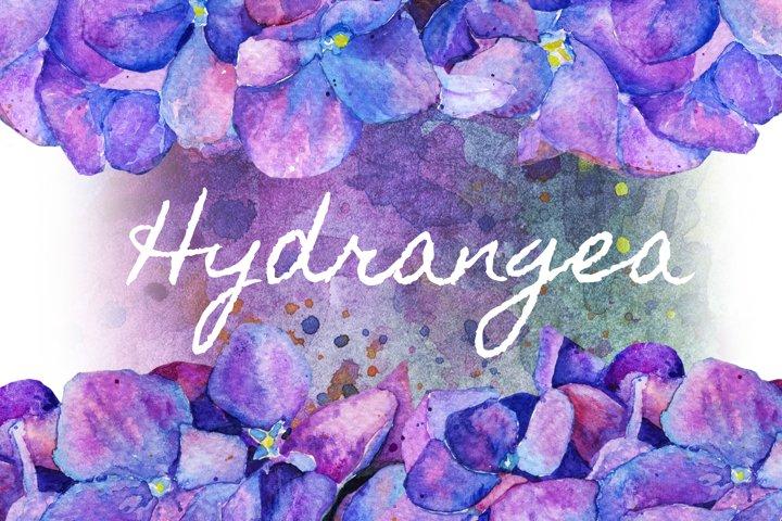 Hydrangea in watercolor flowers. spring summer illustrations