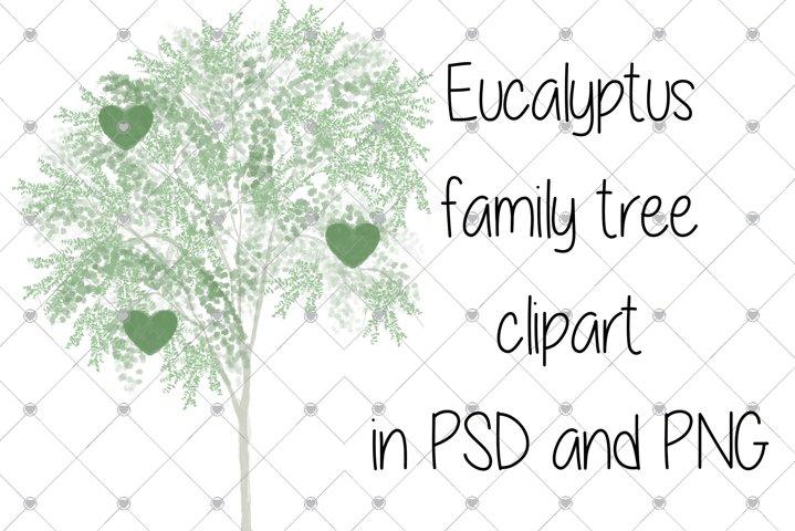 Family tree clipart, Eucalyptus tree,