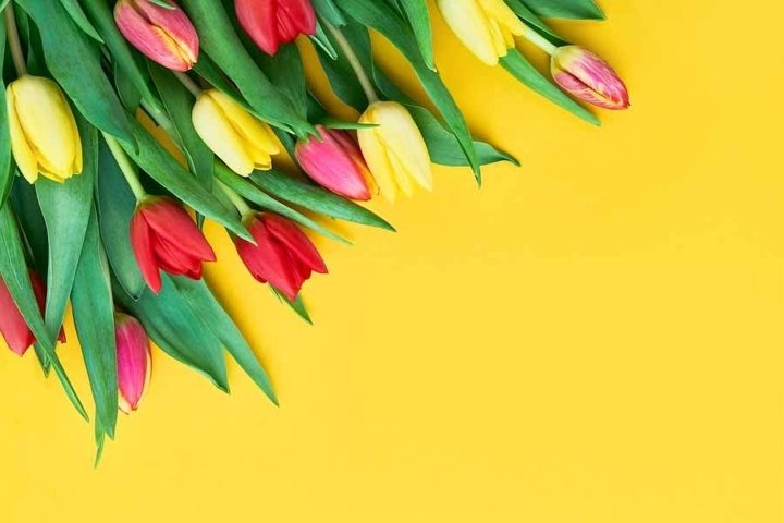 Bouquet of red and yellow tulips on yellow background