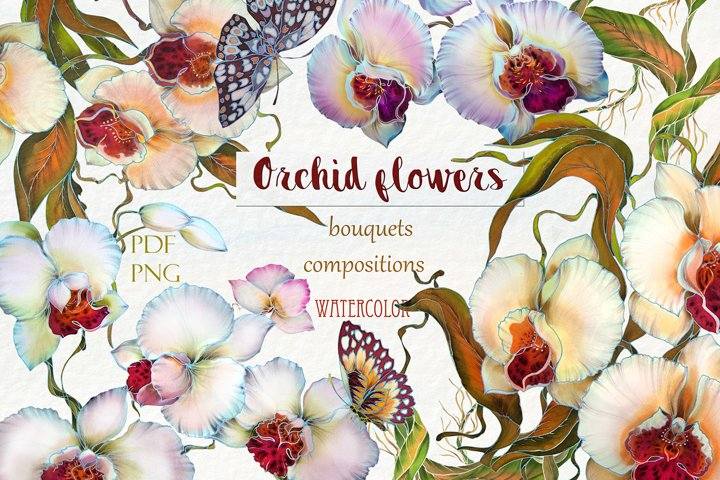 Watercolor cliparts  Orchids
