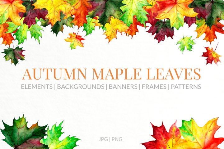 Autumn maple leaves painted in watercolor.