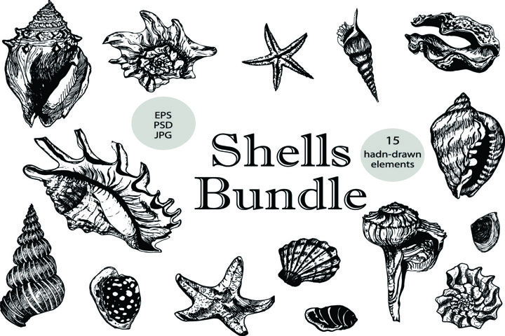 Shells bundle. 15 vector elements for your projects