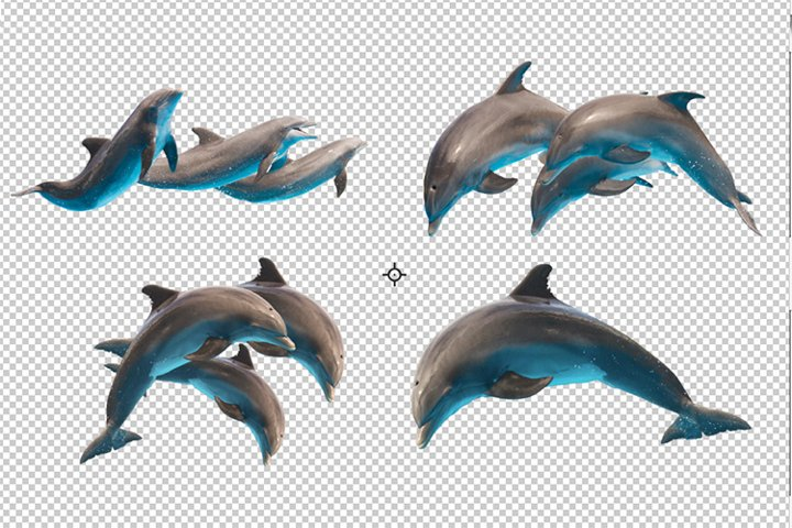 Set of jumping dolphins