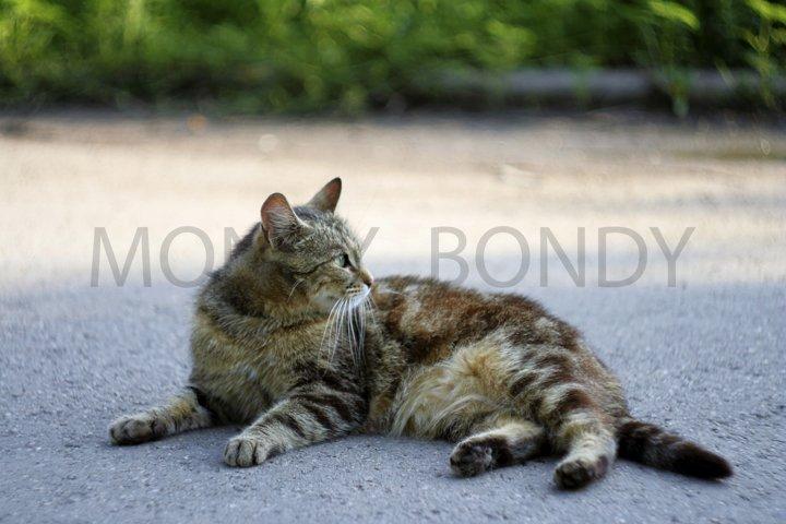 street cat lies on the sidewalk
