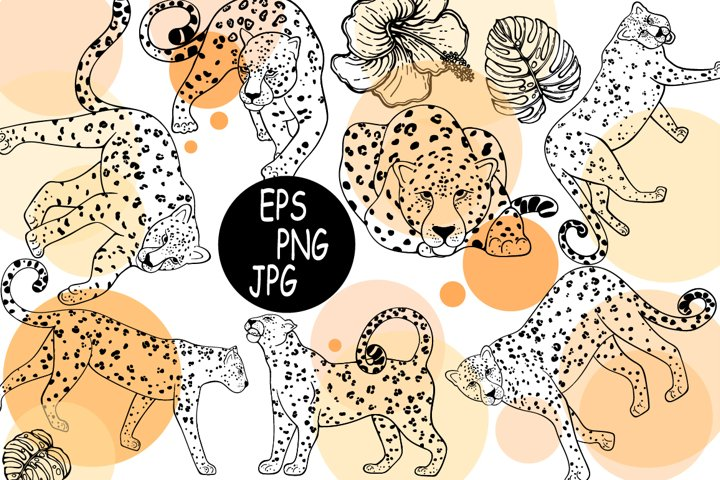 Leopards 4
