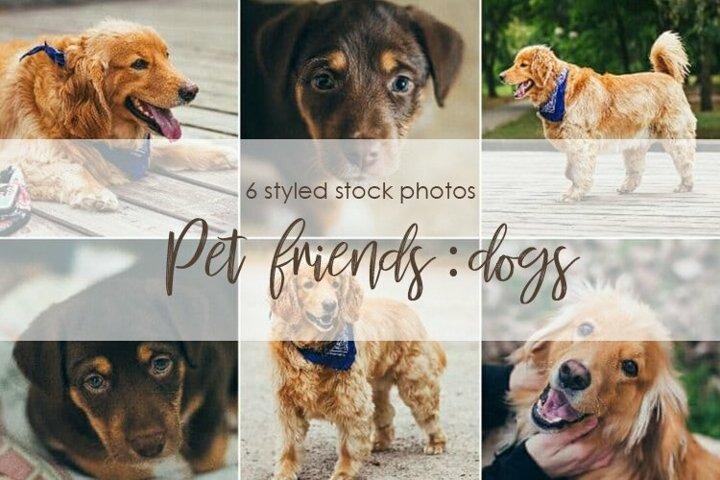 Pet friends dogs bundle