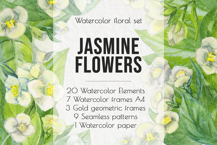 Jasmine flowers and leaves. Watercolor clip art.