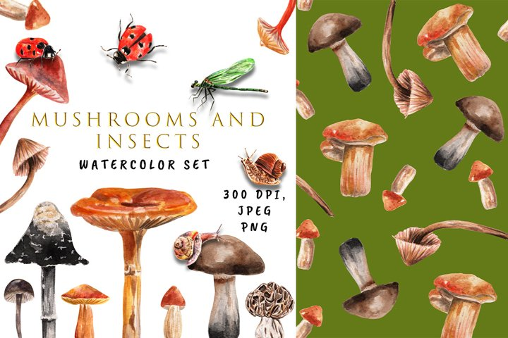 Watercolor Autumn Clipart. Mushrooms and Insects. Patterns