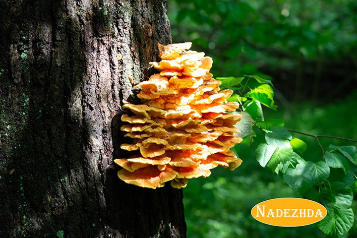 Fungus on tree trunk on sunny day