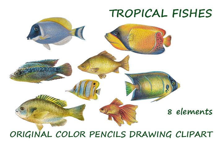 Tropical fishes. original color drawing clipart