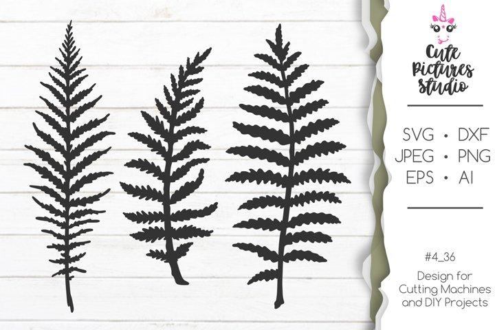 Set of Fern leaves SVG PNG clipart, Wild flower SVG