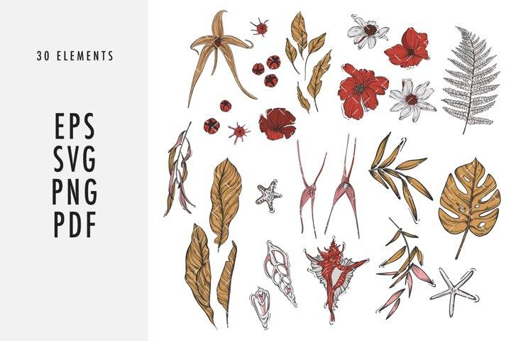 Flowers and shells SVG clipart set line art