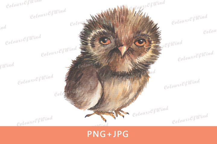 Watercolor sleepy owl sublimation transfer. PNG