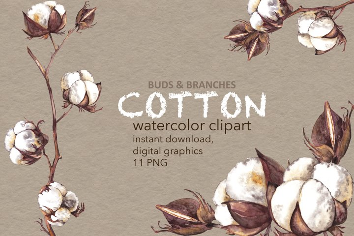 Cotton plant clipart Watercolor realistic bolls branches PNG