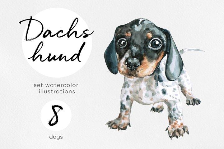 Dachshund. Watercolor dog illustrations. Cute 8 dog