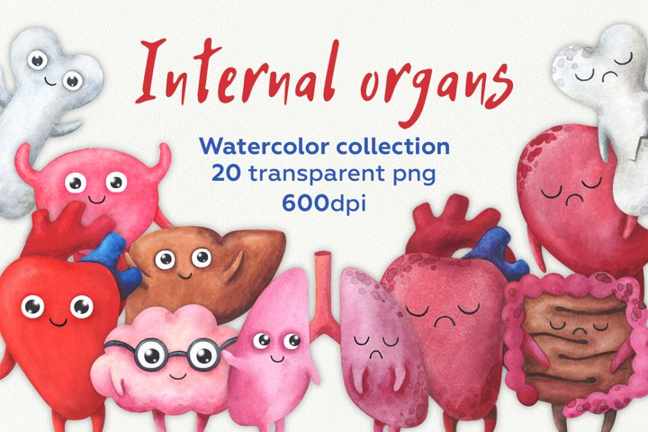 Internal organs. Watercolor collection