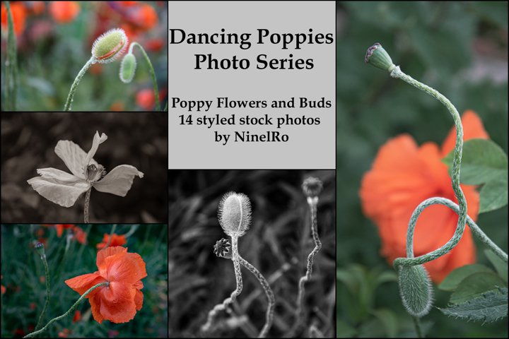 14 Poppy Stock Photo Bundle