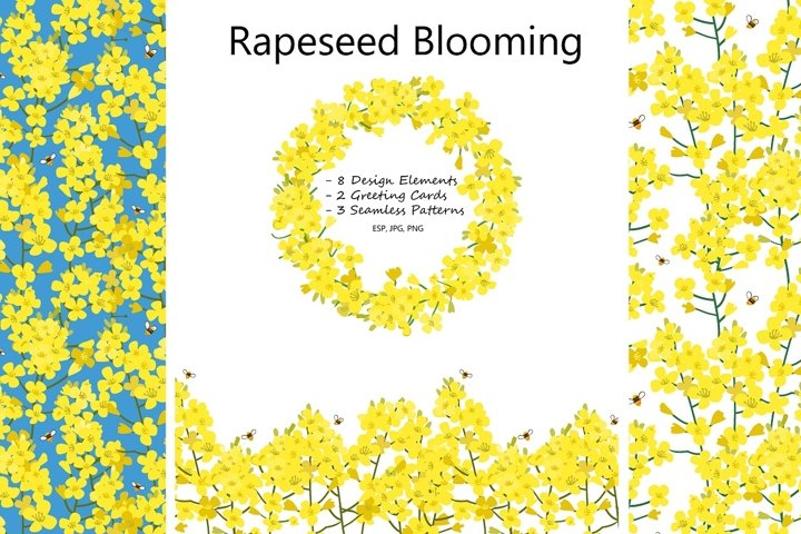 Rapeseed Blooming