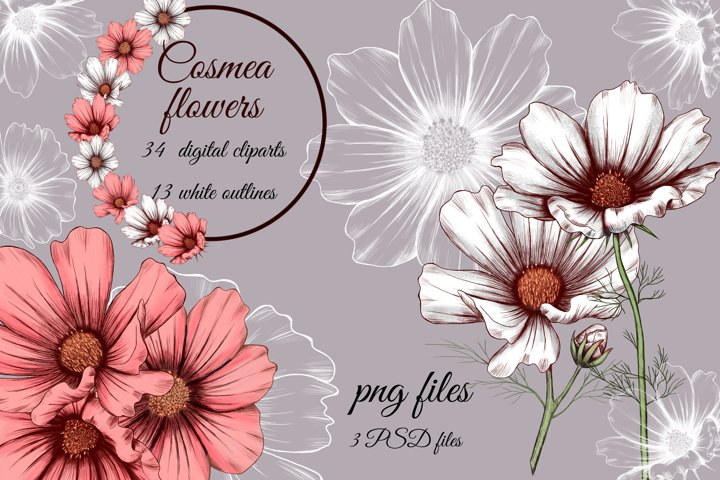 White, pink Cosmos summer flowers clipart png