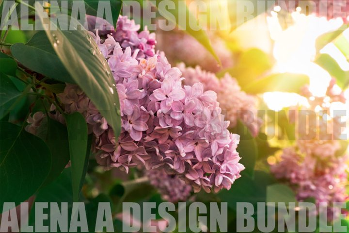 blooming lilac brunch in the sunny garden