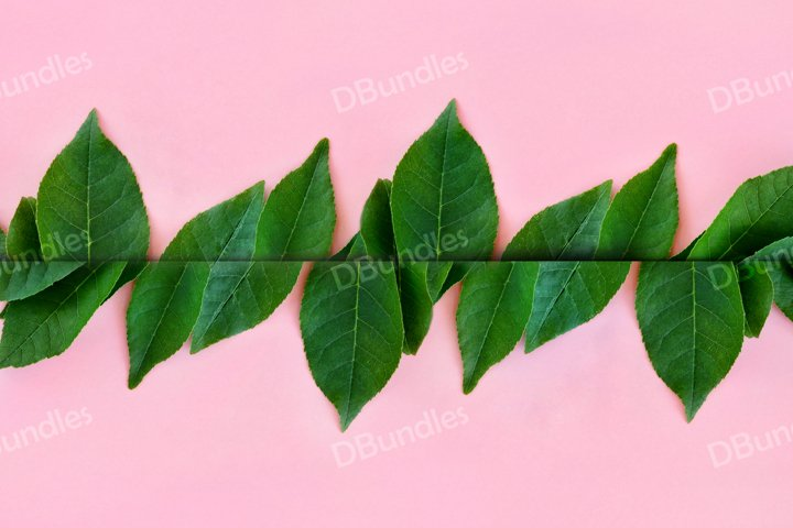 Bright green leaves on a pink background