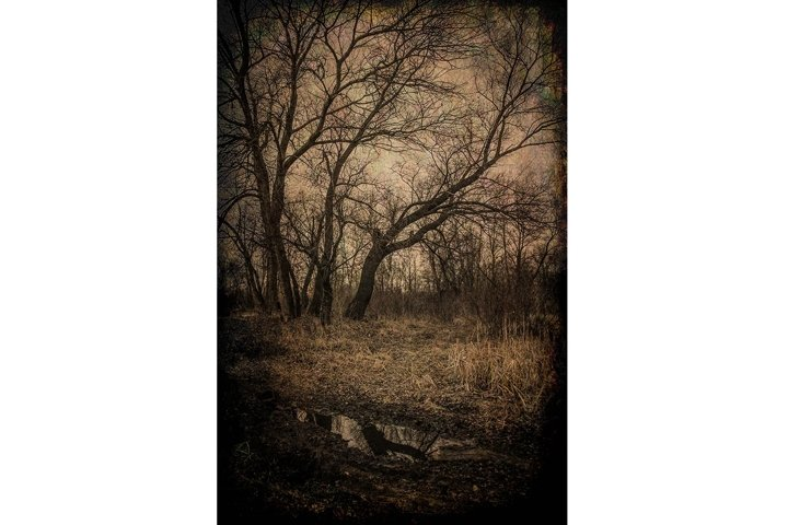 Misty mysterious forest landscape in early spring