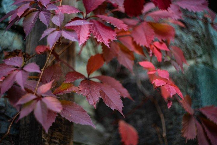 Autumnal nature concept