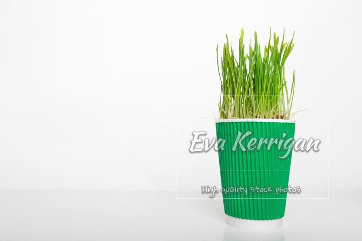 Disposable coffee cup with green grass growing, superfood.