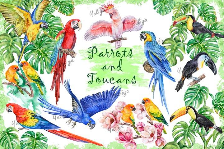 Parrots and Toucans. Watercolor