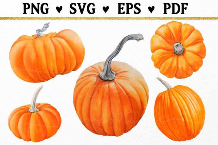 5 Fall Pumpkins Watercolor Clipart