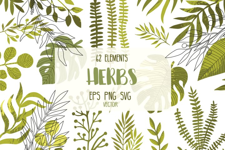 Vector green herbs, Leaves svg, Hand draw herbs