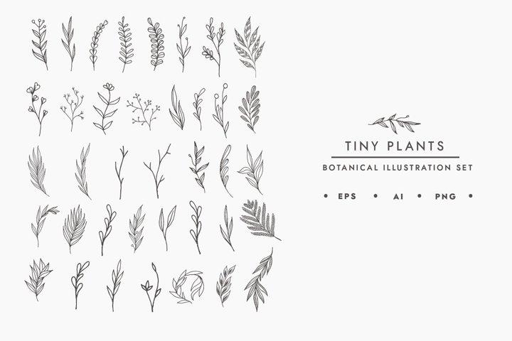Tiny Plants Illustration Bundle