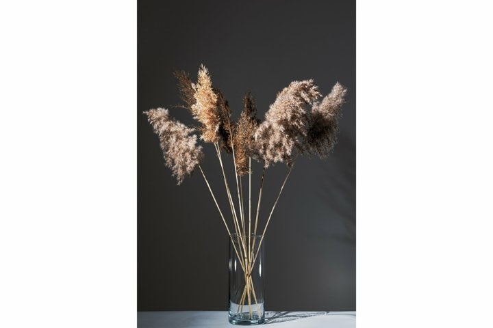 Beige reeds in glass vase on white table against gray wall
