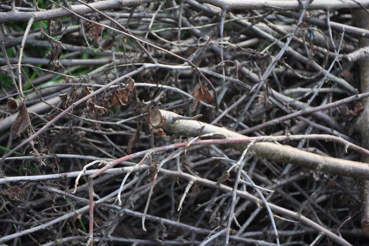 A heap of cut twigs and branches texture or background.