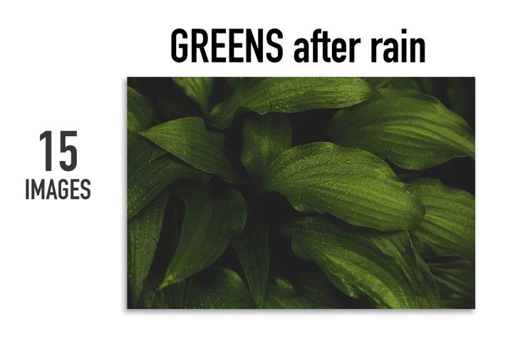Greens after rain. 15 images BUNDLE