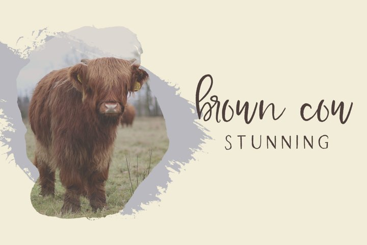 Farmhouse Country Rustic Cursive Font - Free Font of The Week Design3