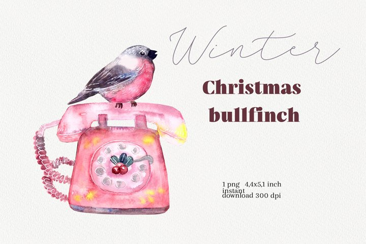 Watercolor bullfinch illustration, Merry Christmas decor