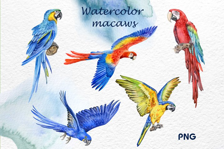 Watercolor parrots, macaws Clipart. Illustrations. Templates